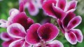 Bahçenize Renk Katacak Bitkiler