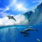 Okyanus ve Yunus Resimli Duvar Kağıdı