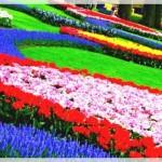 En Güzel Bahçe Dekorasyonları-6