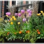 Balkon Çiçek Dekorasyonu