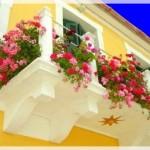 Balkon Çiçek Dekoru
